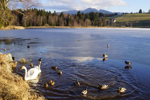 Bayersoier See mit Blick zum Hörnle